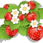 Strawberry bush — Stock Vector
