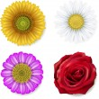 Set of flowers — Stock Vector #9385504
