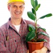 Builder with ficus — Stock Photo