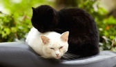 Black and white cats — Stockfoto