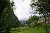Slovenian Julian Alps — Stock Photo