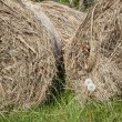 Bales of hay — Stock Photo #8224055