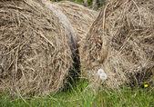 тюки сена — Стоковое фото