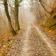 Road in the wood — Stock Photo