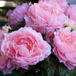 Plastic roses — Stock Photo #8765636