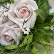 White roses — Stock Photo #8765694