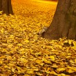 Dried leaves on the street — Stock Photo