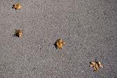 Leaves on asphalt — Stock Photo