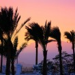 Stock Photo: Silhouette of palm trees