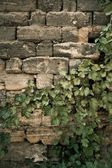 Wall with leaves — Stock Photo