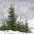 Winter scenery - Stock Photo