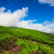 Green meadow and blue sky — Stock Photo #8831651