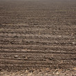 Stock Photo: Fresh soil
