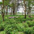 Tropical forest in eastern Africa - Stock Photo