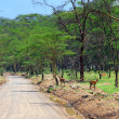 Stock Photo: African road