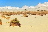 Sahara — Stock Photo