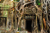 Temple in the jungle — Stock Photo