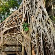 Temple in jungle — Stock Photo #8596161