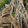 Stock Photo: Temple in jungle