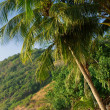 Palm over tropical beach - Stock Photo