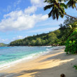 Tropical beach — Stock Photo #9747194