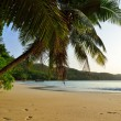 Tropical beach at sunset — Stock Photo #9875669