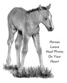 Pencil Drawing of Baby Horse, With Quote — Stock Photo