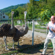 The tourist feeds ostriches on a farm — Stock Photo