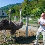 The tourist feeds ostriches on a farm — Stock Photo