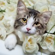 Tabby kitten and colorful flowers - Stock Photo