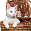Funny white kitten in a basket, surprised muzzle, isolated on white backgro — Stock Photo