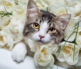 Tabby kitten and colorful flowers — Stock Photo