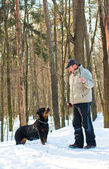 Dog of breed a Rottweiler on walk with the owner in the winter — Stock Photo