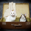 Royalty-Free Stock Photo: Pair of kittens hide in an old suitcase from danger