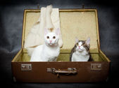 Pair of kittens hide in an old suitcase from danger — Stock Photo