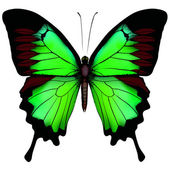 Vector illustration of beautiful green butterfly isolated on wh — Stock Vector