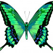 Royalty-Free Stock Vektorfiler: Vector illustration of beautiful blue green butterfly  isolated