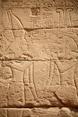 Egyptian hieroglyphs — Stock Photo