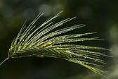 绿草与水滴眼液 — 图库照片