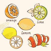 Citrus doodle set — Stock Vector