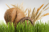 Basket with grain bread and cereals behind green grass. — Stock Photo