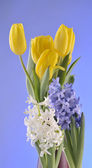Spring flowers on blue background — Stock Photo