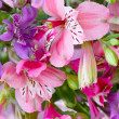 Stock Photo: alstroemeria