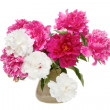 Spring flowers - peonies — Stock Photo