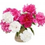 Spring flowers - peonies — Stock Photo