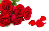 Red roses isolated on a white background — Stock Photo
