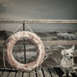 Lifebuoy - Photo