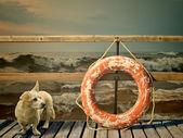 Záchranný kruh a pes — Stock fotografie