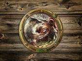 Porthole with hippopotamus — Stock Photo
