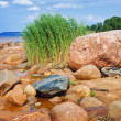 Royalty-Free Stock Photo: Sea rocky beach